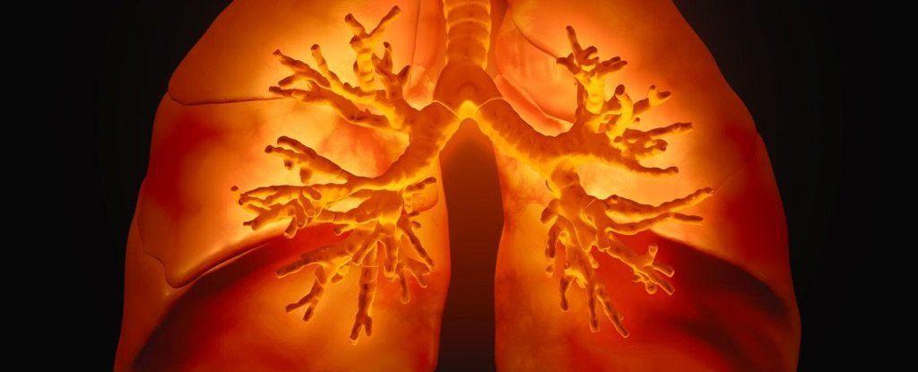 الهندسة الحيوية: باحثون يطورون رئات ذات تروية دموية جيدة