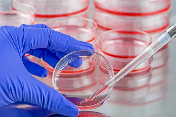 المكورات المعوية المقاومة للفانكوميسين: الأسباب والأعراض والتشخيص والعلاج