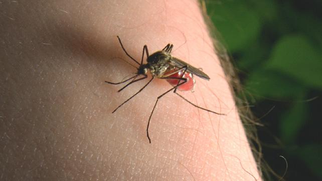 هل يجب أن نقلق بشأن لدغات البعوض؟