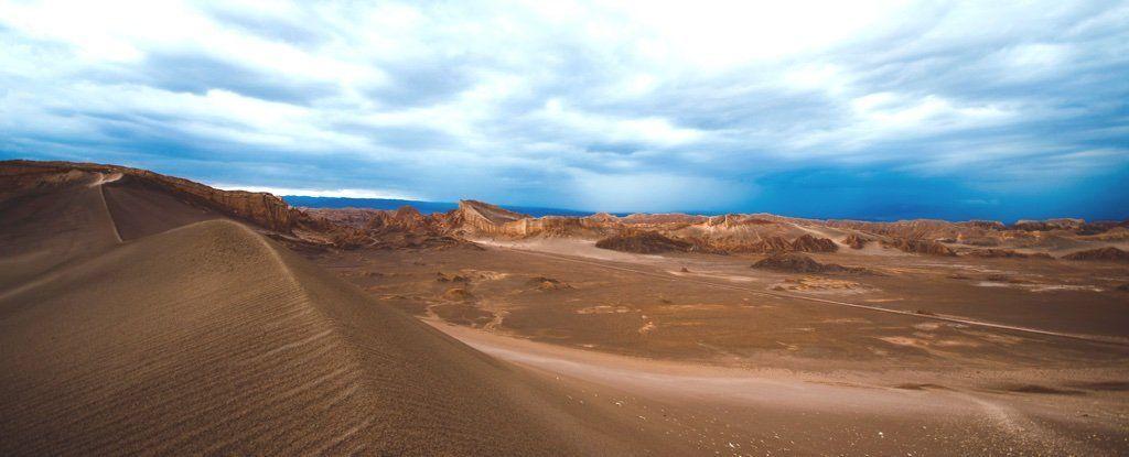 على عكس المتوقّع، عندما تُمطِر السماء على الصّحراء الأكثر جفافًا في العالم ستجلبُ الموتَ للأرض، لا الحياة