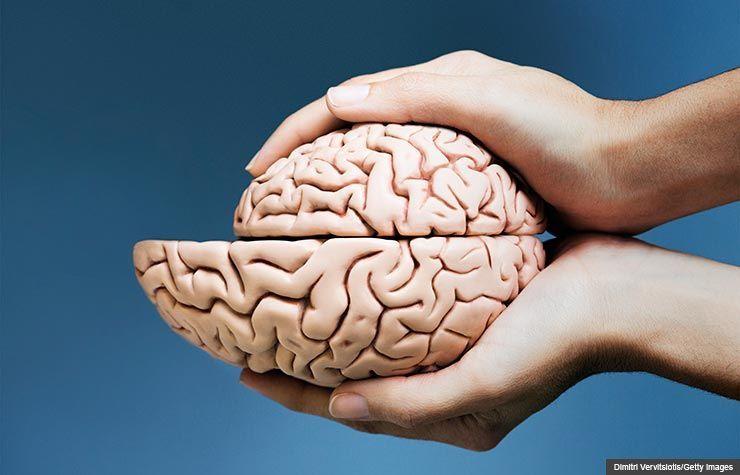 هل ينكمش الدماغ بمرور العمر ؟