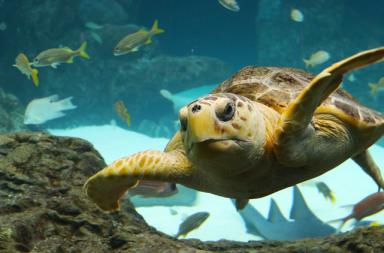 العلماء يضعون خطة لتجديد الحياة البحرية بحلول عام 2050 - والبحار والموارد البحرية والمحافظة عليها - تحمض المحيطات والتلوث البلاستيكي - الحياة البحرية