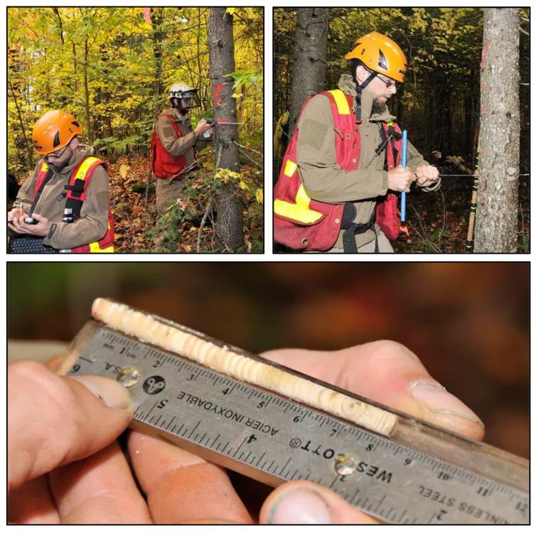 أخذ العينات من لُب الأشجار والعمل الميداني الذي قامت به حكومة كيبيك، ساهم بمجموعة كبيرة من البيانات