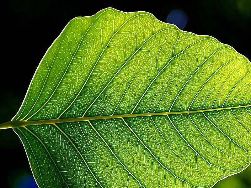 علماء يحاكون أوراق النبات في إعادة تدوير غاز ثنائي أكسيد الكربون