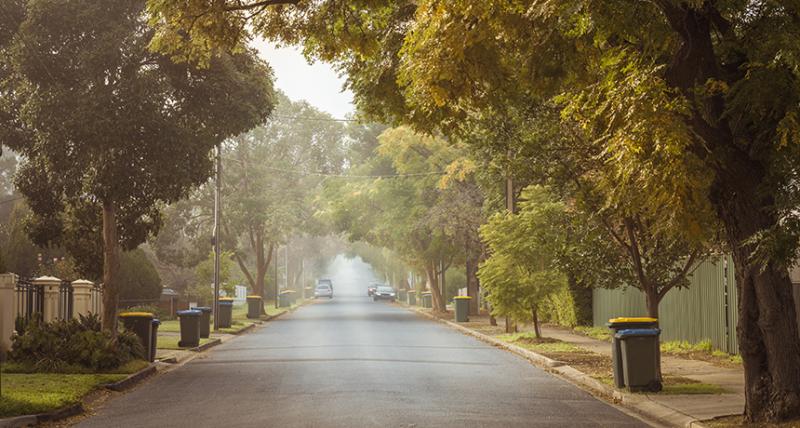 الأشجار تنمو أسرع وتموت أبكر وتمتص كميات أقل من الكربون