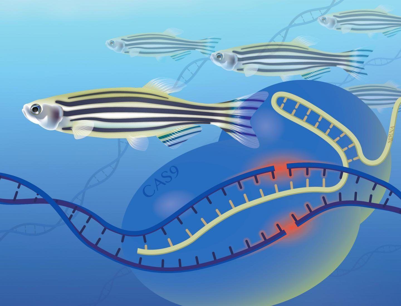 طريقة جديدة لتحديد وظائف الجينات ستمكننا من فهم عمليات الحياة