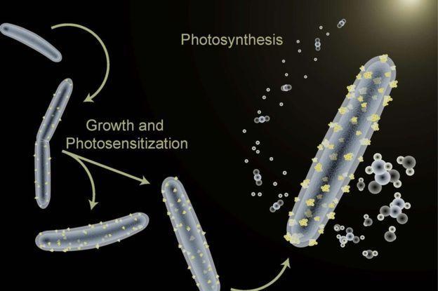 البكتريا المنتجة للوقود - بكتريا الديزل !