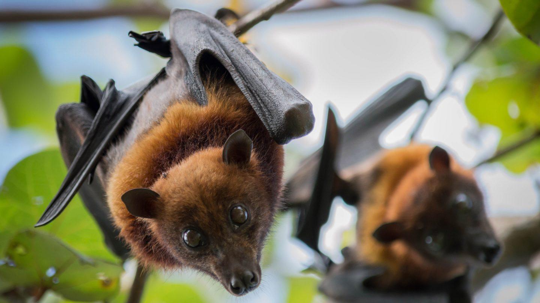 استغلال الحياة البرية يسبب انتشار المزيد من الفيروسات