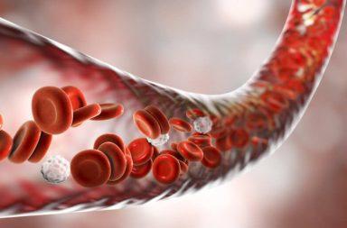قد تساهم الدهون حول الأوعية الدموية في الحفاظ على سلامتها - الطبقة الدهنية tunica adipose - الحفاظ على صحة الأوعية الدموية