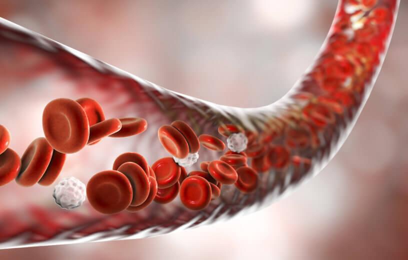 قد تساهم الدهون حول الأوعية الدموية في الحفاظ على سلامتها