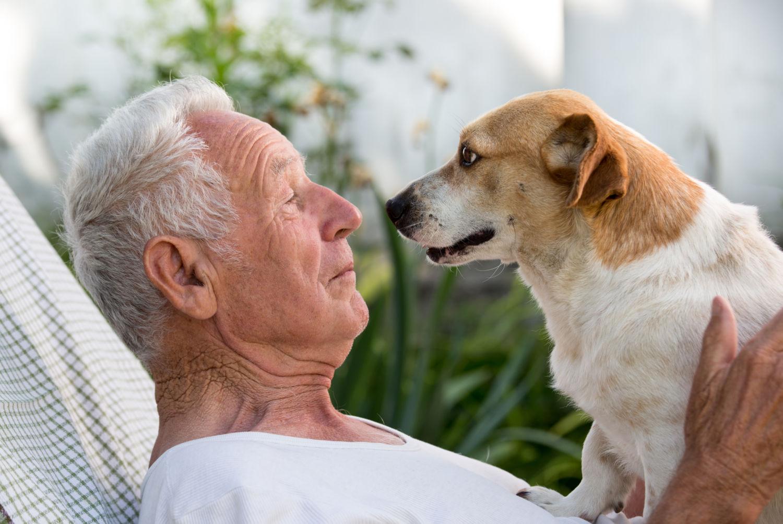 الحيوانات الأليفة تحمي كبار السن من الانتحار - منع بعض كبار السن من إنهاء حياتهم - إطعام الحيوانات الأليفة والاعتناء بها من قبل العجزة