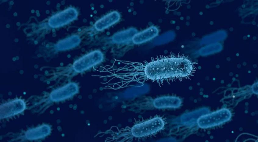 اكتشاف نمط جديد من التمثيل الغذائي للبكتيريا في أعماق المحيط
