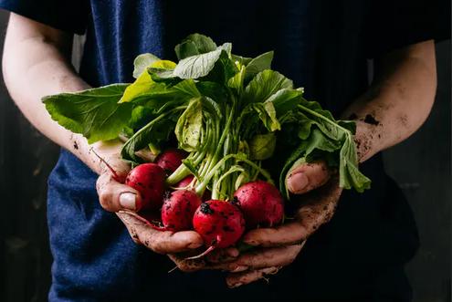 هل يجب علينا اتباع نظام غذائي عضوي - تُزرَع من دون أسمدة صناعية أو مبيدات حشرية، وتخلو الأغذية العضوية الحيوانية من الهرمونات والمضادات الحيوية