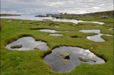 كيف يمكن أن تنقذ المستنقعات المالحة الأرواح في المستقبل - تكشف الفيضانات التاريخية كيف يمكن المستنقعات المالحة إنقاذ الأرواح في المستقبل