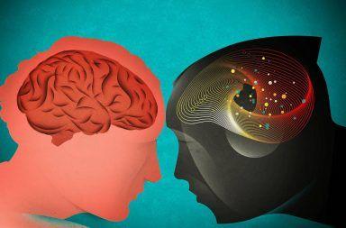 ما وجه الشبه بين الذاكرة قصيرة المدى عند البشر و الشمبانزي ما وجه الشبه بين دماغ البشر والشمبانزي بخصوص الذكريات الذاكرة المؤقتة