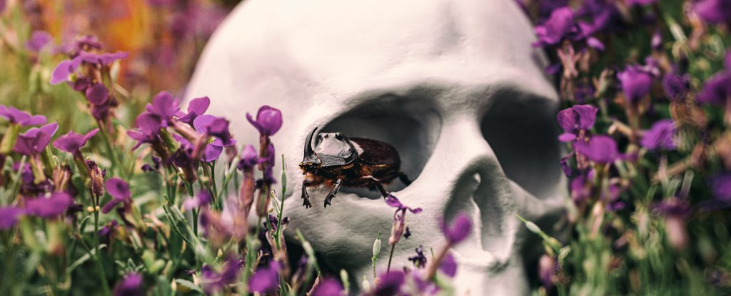 ما دور الحشرات في تحلل الجثث وتحويلها إلى هياكل عظمية - عملية التحلل - العناصر الغذائية المعاد تدويرها لتستطيع كائنات حية أخرى الاستفادة منها