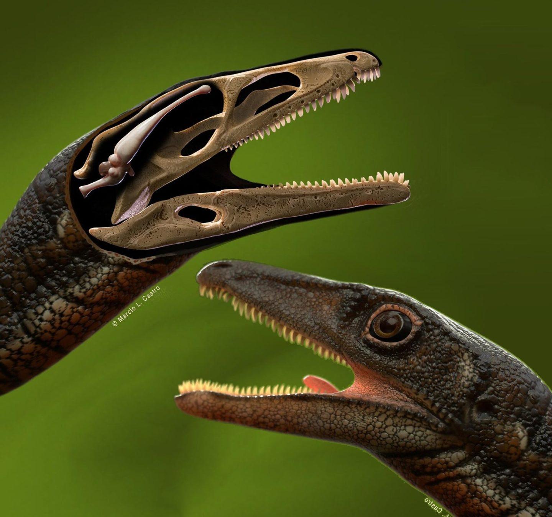 للمرة الأولى، إعادة بناء دماغ كامل لأحد أقدم الديناصورات