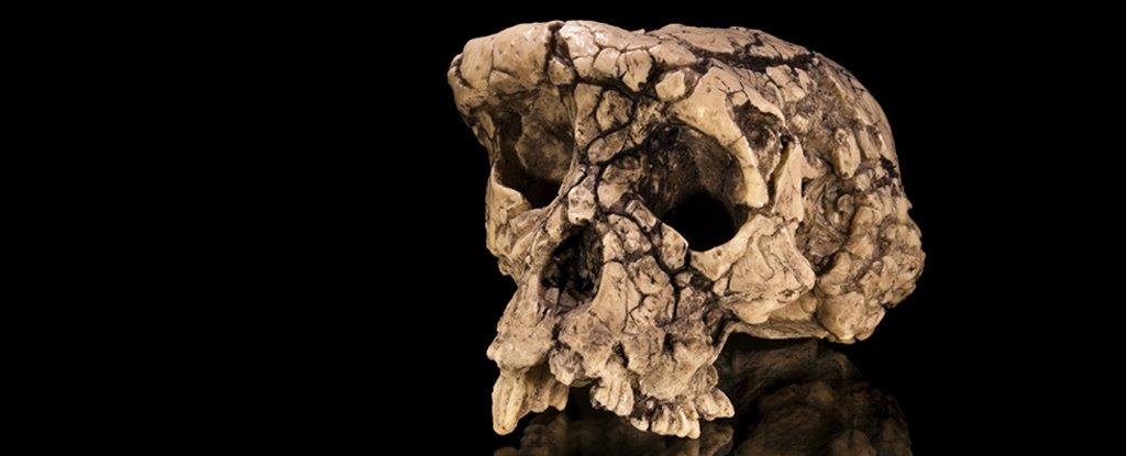 جمجمة سلف الإنسان قبل سبعة ملايين عام قد لا تكون مثلما نظن - الميزات الشبيهة بالقردة والشبيهة بالإنسان - أشباه البشر - أسلاف البشر - ساهيلانثروبوس