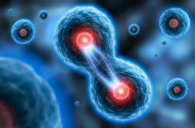 اكتشف العلماء معلومات جديدة عن الانقسام الخيطي كيفية مساهمة المريكزات (centrioles) في عملية الانقسام الخيطي خيوط المغزل تكاثر الخلايا