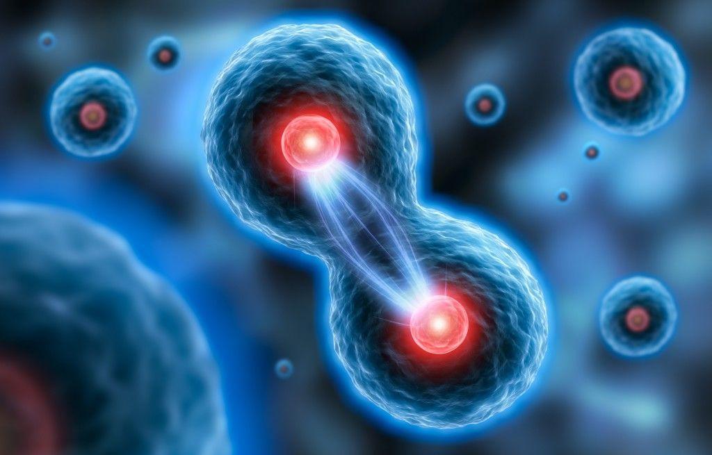 اكتشف العلماء معلومات جديدة عن الانقسام الخيطي