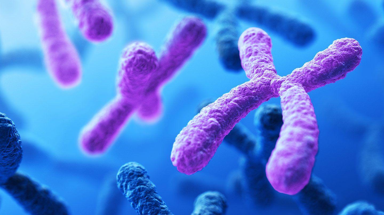 كيف تنتقل الجينات الوراثية ؟