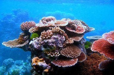 الشعاب المرجانية المرجان المحيطات البحر