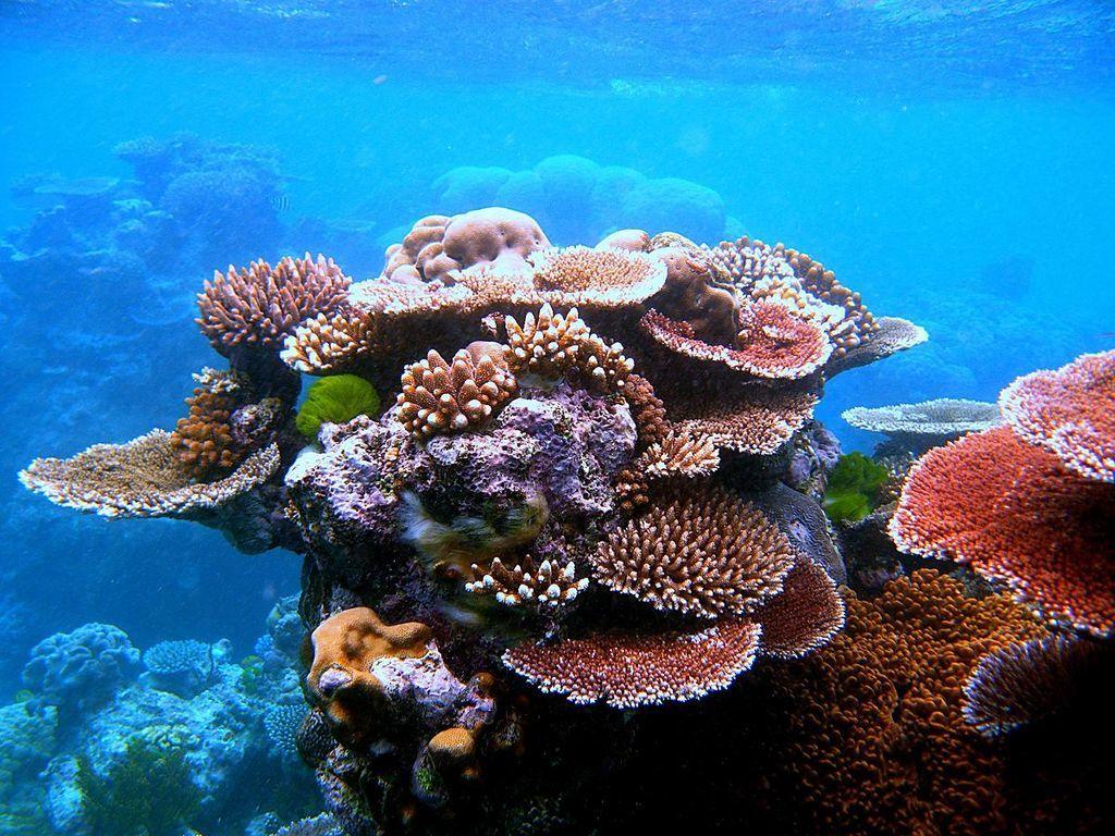 ما هو المرجان (الشعاب المرجانية)؟ كيف يعيش، وما أهميته؟