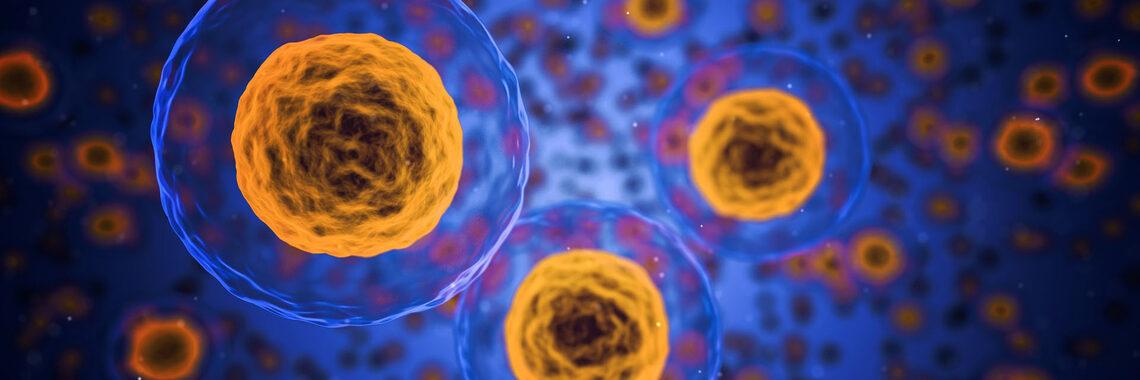 بروتين في الجسم له دور في تنظيم سكر الدم - بروتين شائع في الجسم له دور في تنظيم مستويات السكر في الدم - الخلايا المنتجة للإنسولين