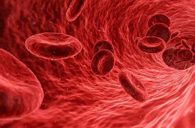 كثرة كريات الدم الحمراء: الأسباب والعلاج - حالة يصنع فيها الجسم كميات كبيرة من كريات الدم الحمراء - خلايا نقي العظم - مستويات الإريثروبويتين