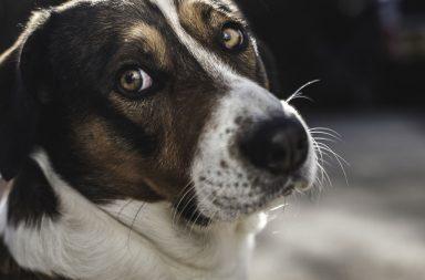 8 أشياء نفعلها تحيّر كلابنا - تربية الحيوانات الأليفة - مناطق لا يسمح للكلاب أن تدخلها حتى في منازلنا - سلوكيات البشر التي تستغرب الكلاب منها