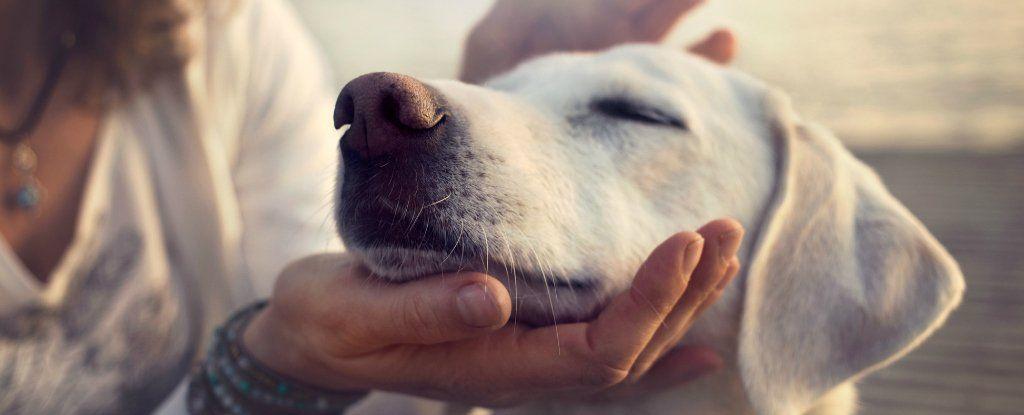 هل تعادل سنة من عمر الإنسان 7 سنوات من عمر الكلاب؟