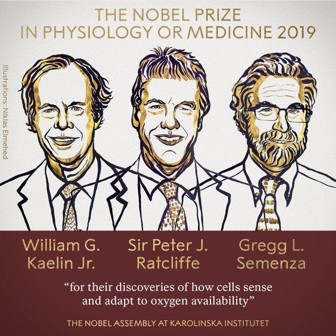 جائزة نوبل بالطب لعام 2019: كيف تستشعر الخلايا توافر الأكسجين وتتأقلم معه