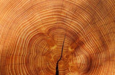 هل تمكن رؤية السوبرنوفا في الأشجار - تأثير أشعة السوبرنوفا على الأشجار المعمرة على سطح الأرض - انفجار نجمي في مجرة درب التبانة - الكربون المشع