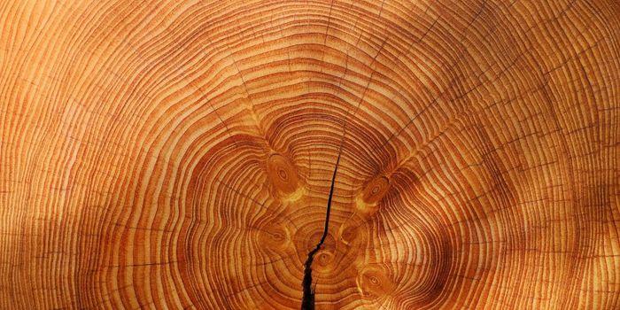 هل تمكن رؤية السوبرنوفا في الأشجار؟