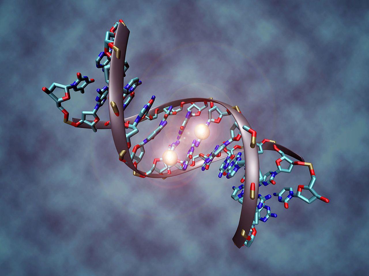 ما هو علم التخلق أو علم ما فوق الجينات - مراقبة مستويات التعبير الجيني دون إحداث أي تغيير على سلسلة الحمض النووي - علم الجينات والخلية العصبية