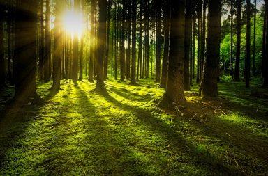 التغيرات البيئية العالمية تؤدي إلى غابات أقصر عمرًا وطولًا - التغيرات المناخية الجارية تحول الغابات حول العالم - تأثيرات خطيرة في النظم البيئية وفقًا