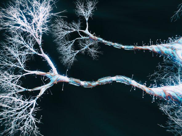 ما هو المحور العصبي؟