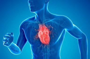 كيف يعمل القلب؟ - كيف يضخ القلب الدم المحمل بالأكسجين والمواد الغذائية للحفاظ على حياتك - كيف ينتقل الدم عبر القلب إلى بقية أعضاء الجسم؟