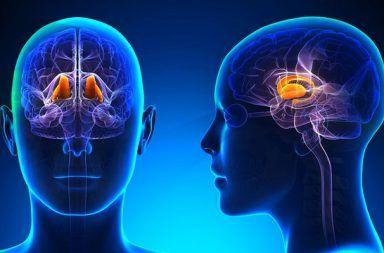 قصور الغدة النخامية نقص نشاط الغدة النخامية وظيفة الغدة النخامية تحفيز الغدة الدرقية الهرمونات التي تتحكم في عملية الأيض الجانب السفلي من الدماغ