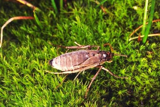 داروين على حق مرة أخرى: الرياح تجبر الحشرات على التخلي عن الطيران