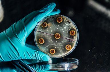 الباحثون يطورون برنامجًا لتحري الجراثيم المقاومة للأدوية - برنامج سهل الاستخدام لتحديد الجراثيم المقاومة للمضادات الحيوية