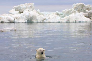 حقائق مثيرة عن المحيط المتجمد الشمالي معلومات جديدة لم تكن تعرفها عن المحيط المتجمد الشمالي الجليد القطب الشمالي درجة الحرارة