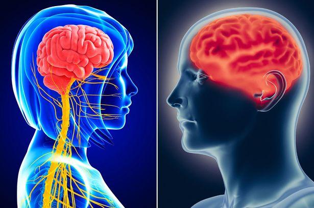 لا وجود لاختلافات وظيفية بين أدمغة الذكور والإناث - كيف يختلف دماغ الأنثى عن دماع الذكر - اختلافات ثابتة قابلة للملاحظة بين أدمغة النساء والرجال