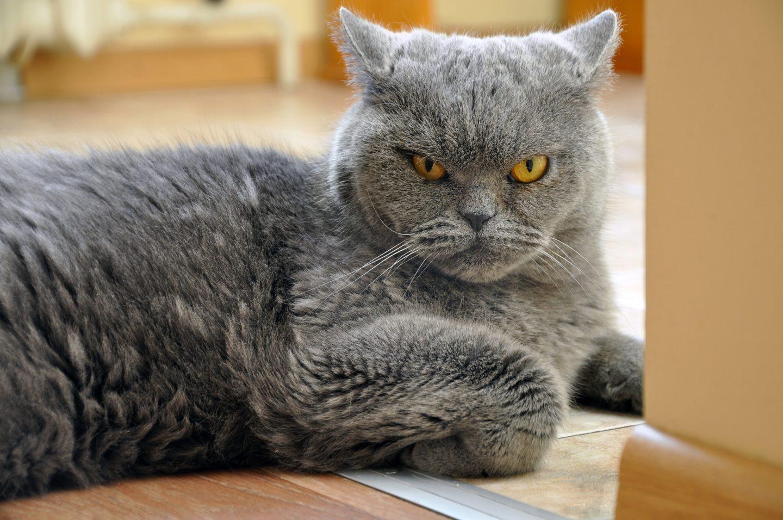 في دراسة مرعبة القطط تأكل جثث البشر أحيانا