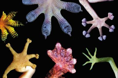 المحاكاة الحيوية التنبؤ بمستقبل العلوم والهندسة والطب ما هي الطريقة التي يتنبأ بها العلماء حول المستقبل مستقبل الهندسة الحصول على أفكار من الطبيعة