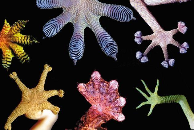 المحاكاة الحيوية: التنبؤ بمستقبل العلوم والهندسة والطب