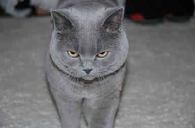 لماذا يخاف البعض القطط؟ وكيف يمكن التخلص من رهاب القطط - ما هو السبب الذي يدفع بعض البشر إلى الخوف من القطط - الخوف من الهررة