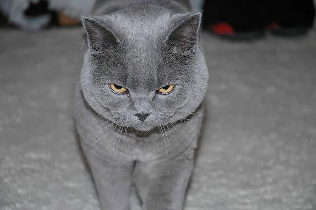 لماذا يخاف البعض القطط؟ وكيف يمكن التخلص من رهاب القطط؟