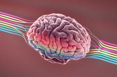 يستطيع فيروس كورونا الجديد أن يغزو الدماغ - عدوى سارس-كوف-2 - فقدان حاسة الشم - الإصابة بكوفيد-19 - العصبونات في التجويف الأنفي