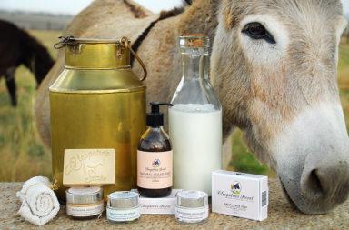 لماذا تزداد شعبية حليب الحمير وهل لشربه فوائد صحية - تجربة أطعمة ومشروبات جديدة غير تقليدية - الاستخدامات الطبية والتجميلية لحليب الحمير
